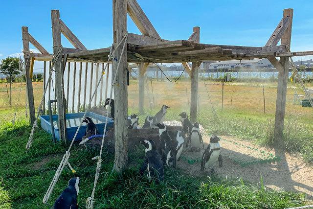 もともとのペンギン休憩小屋