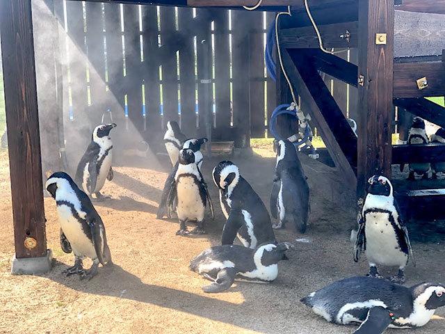 完成した小屋で涼むペンギン